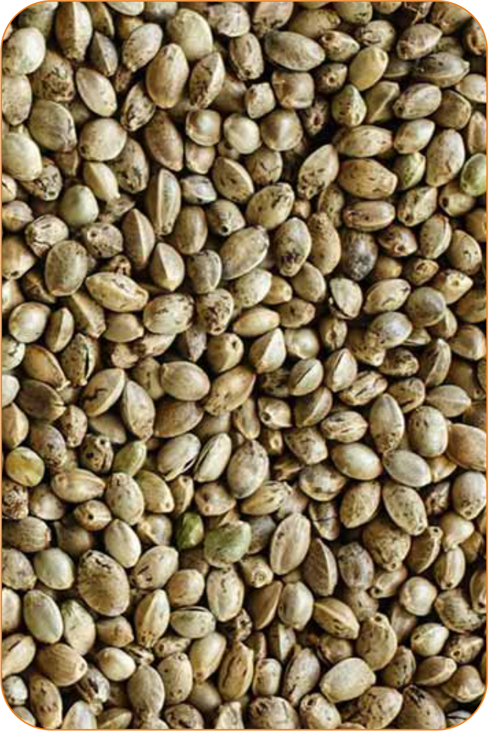 Konopné semínko suché 0,5 kg
